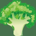brocoli - Dossier : Fruits et légumes de saison au mois d'octobre