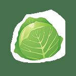 chou - Dossier : Fruits et légumes de saison au mois d'octobre