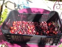 Confiture de prunes sauvages(1)