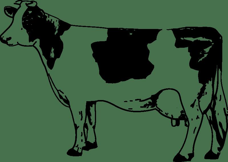 Download Cow Clip Art ~ Free Clipart of Cows: Cute Calfs