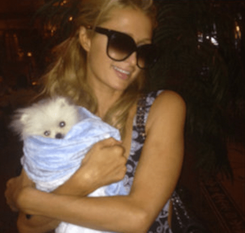 To Be Paris Hilton's $13,000 Pomeranian