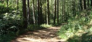 Vista del parque natural de montseny