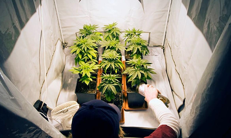 8 itens para cultivo indoor de cannabis