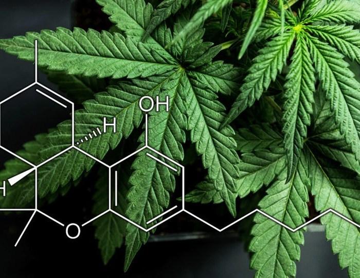 imagem de uma folha de cannabis e a molécula do THC