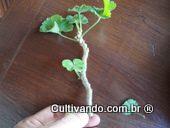 Retire as folhas da base