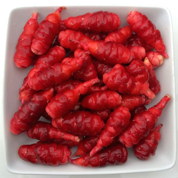 Oca Mocrocks 5 medlarge 2018 PREORDER Cultivariable