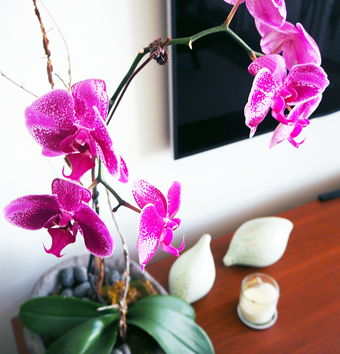 orchid-feature