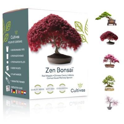 mini kit zen bonsai