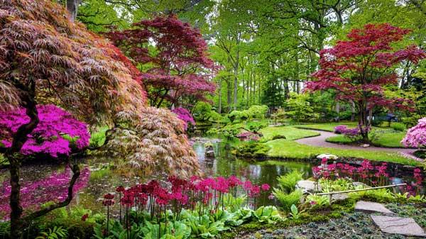 Grand jardin japonais