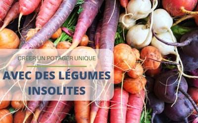 Créer un potager unique avec des légumes insolites