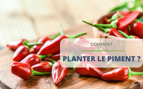 Comment planter du piment