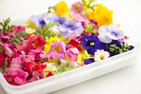 Fleurs comestibles cuisine