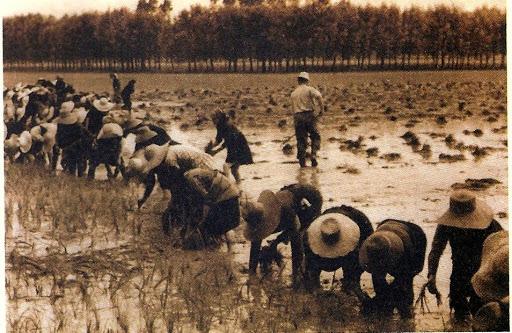STORIE RITI E MITI  ecomuseo del riso dei fiumi e del