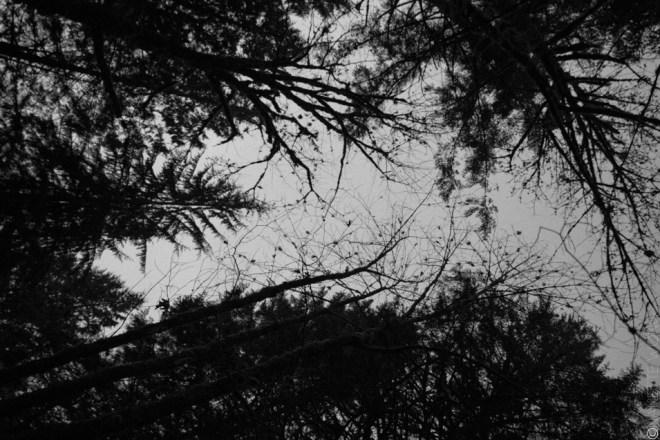 LynnCanyon aerial trees