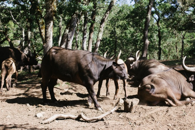 Safari West © Cultural Chromatics-8