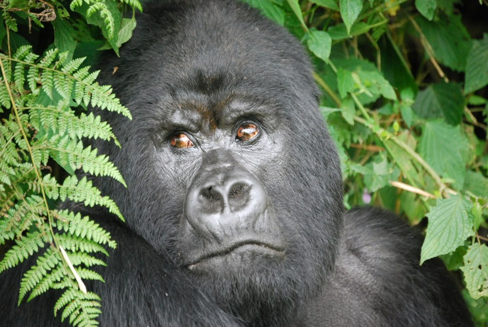 Rwanda Africa trip tour travel vacations