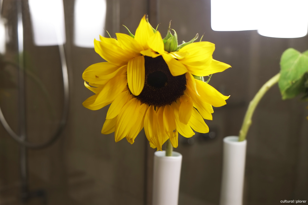 Sunflower Sofitel Legend