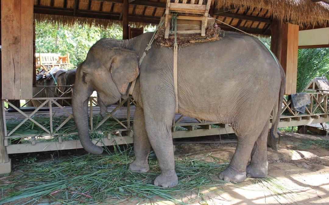 Um Santuário de Elefantes no Laos