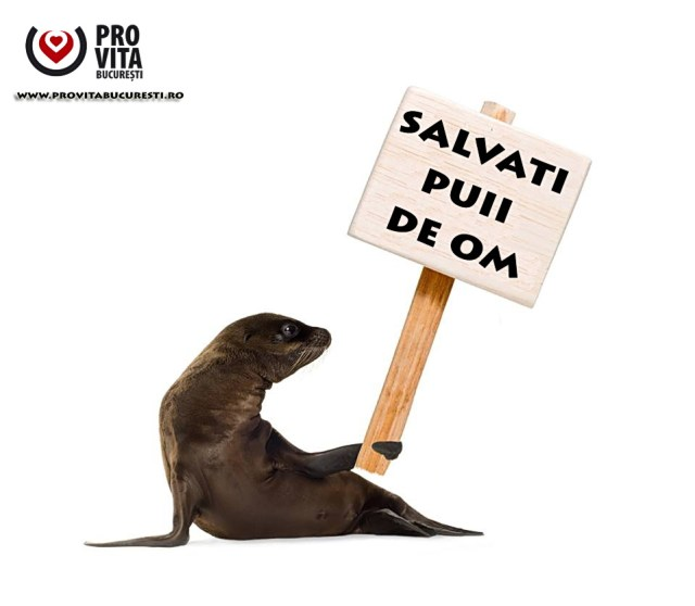 foca-salvati-puii-de-om copy