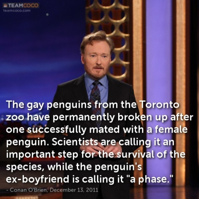 dec-13-2011-the-gay-penguins-from-the-toronto-zoo-have-permanently (2)