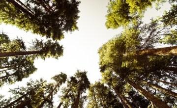 CALIFORNIA: เดินป่า 211ไมล์ 25วัน ในภาพยนต์สารดคี MILE… MILE & A HALF