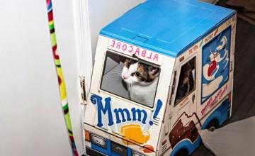 """NEW YORK: Meow Parlour คาเฟ่ """"แมวนิวยอร์ก"""" แห่งแรกที่คิวยาวที่สุดในขณะนี้"""