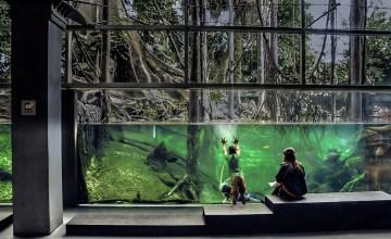 BARCELONA : Flooded Forest แห่งพิพิธภัณฑ์ CosmoCaixa กับการจำลองป่าอเมซอนมาไว้ที่สเปน