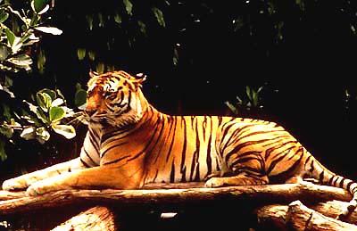 Kids Animal Wallpaper Class 2di 204 S India Web Site