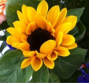 Un soleil en fleur