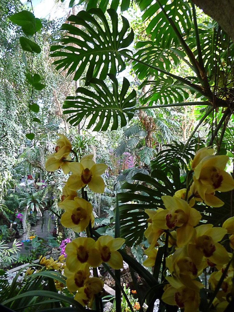 Exposition Mille et une orchidées, grande serre du Jardin ...