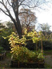 La vigne prend ses couleurs d'automne