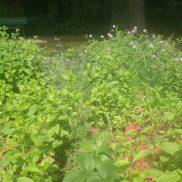 Jardin Marcotte Juin 2018