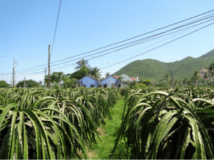 Vietnamese agriculture