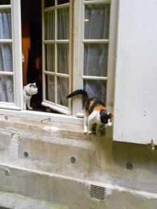 FrenchCats