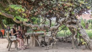 Cambodia-Phnom-Penh-killing-fields-curly-tree-5472x3078