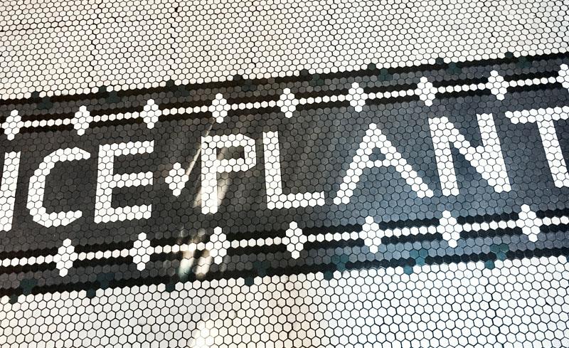 ice plant tiles