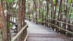 belize rain forest walk