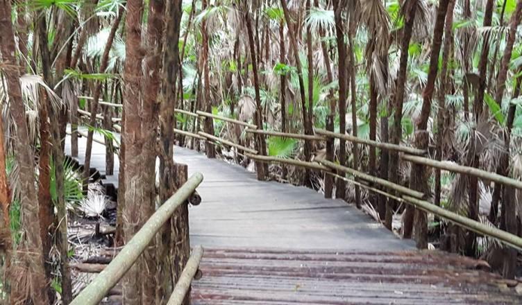belize rain forest walk