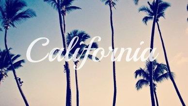California_Palm_Trees