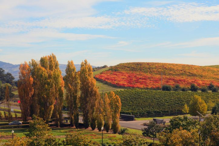 Fall in Napa Valley (Photo from Wikipedia)