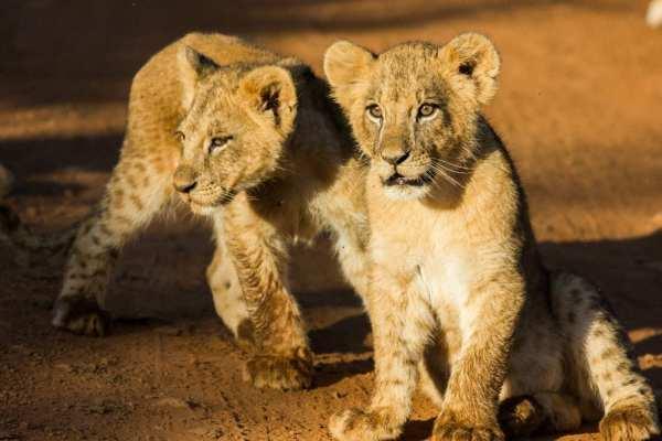 Must Go: Experience Kenya's Wildlife on Safari