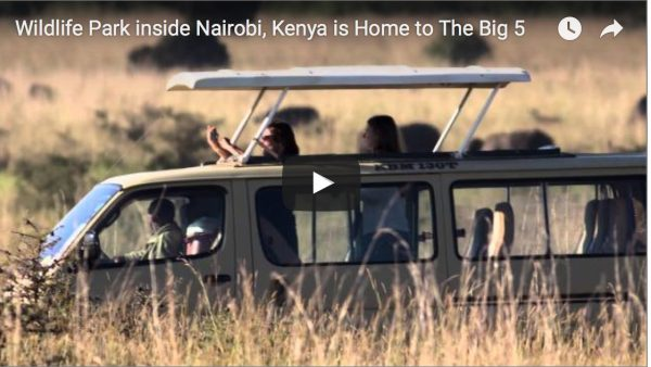 VIDEO: Experience Safari Culture in Kenya to Enhance Your Life