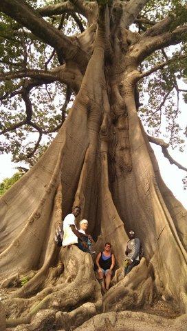 800 jaar oude boom