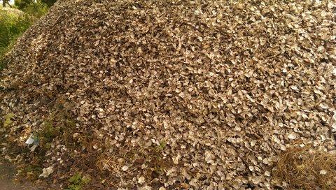 gemalen oesters