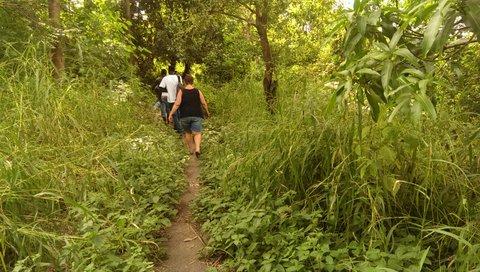 wandelen in de mangrove