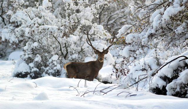"""<p>Merkezdeki geyikler için özel yemler hazırlanıyor. Korkak karakterleriyle bilinen geyikler, yemek saatleri geldiğinde ormanın içinden çıkarak, yemleme alanına geliyor.<br data-mce-bogus=""""1""""></p>"""