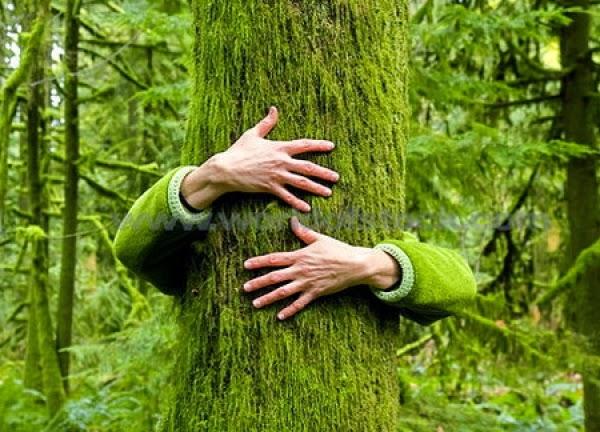 copaci imbratisati 2
