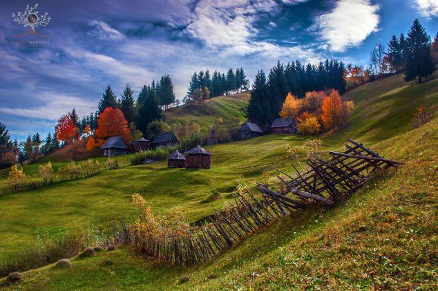 Transilvania 5