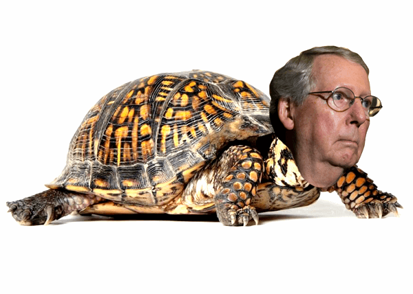 Mitch McConnell box Turtle