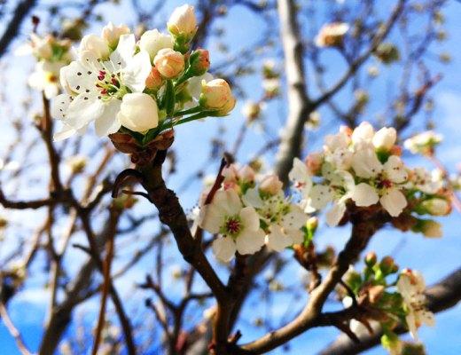 New spring blooms in Boulder Colorado | www.cupcakesandthecosmos.com